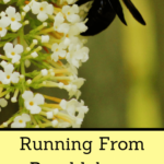 Running From Bumblebees